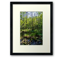 Trees in Briesetal, a flooded valley in Germany Framed Print