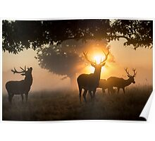 Stags and a halo of dawn fire Poster