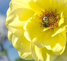 Bumble bee on large yellow flower by Tammee Berry