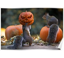 Squirrel with a pumpkin on his head Poster