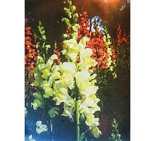 VINTAGE FLOWERS Photographic Print