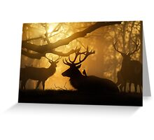 Stags Thawing Out After A Cold Night Greeting Card