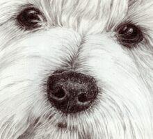Coton de tulear - the cotton dog Sticker