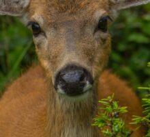 Hello My Deer! Sticker