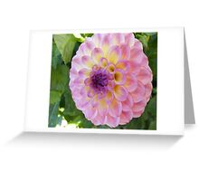 PRETTY IN PINK DAHLIA SURPRISE Greeting Card