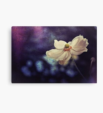 Oxford Anemone Canvas Print