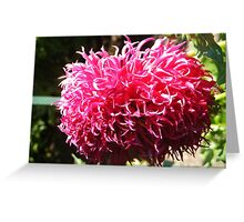 BAD HAIR DAY DAHLIA DELIGHT Greeting Card