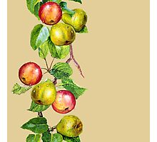 Apples and Pears Photographic Print