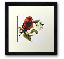 Beautiful Bird  Framed Print
