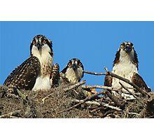Osprey Family Photo Photographic Print