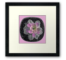 Succulent Berry Framed Print