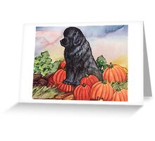 Newfie Harvest Greeting Card