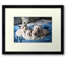 Atticus, Lee, Harper, and Finch Framed Print