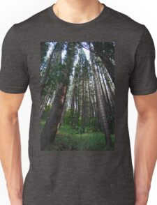 Giant forest trees Unisex T-Shirt