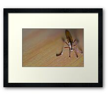 If I was a Fly... Framed Print