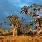 early morning light near Ross (Tasmania) by gaylene