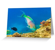 Coral Trout Greeting Card