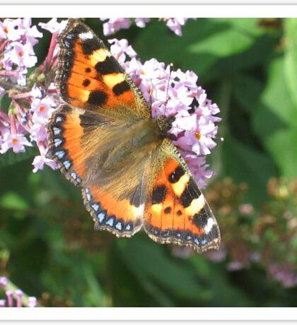 Monarch Butterfly on Lilac 1 Sticker