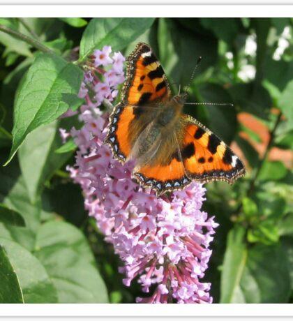 Monarch Butterfly on Lilac 2 Sticker