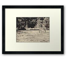 Stripes and tiles, it is a wildlife Framed Print