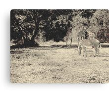 Stripes and tiles, it is a wildlife Canvas Print