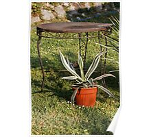 succulent plant in the garden Poster