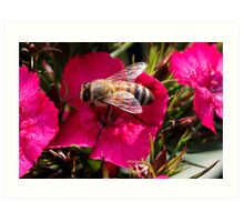 wasp on flower Art Print