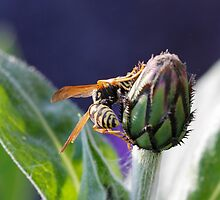 wasp on flower by spetenfia
