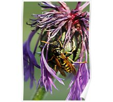 wasp on flower Poster