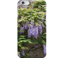 wisteria in spring iPhone Case/Skin