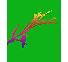 Illustration of Hummingbird in rainbow colors with green background Photographic Print