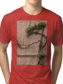 tree in spring Tri-blend T-Shirt
