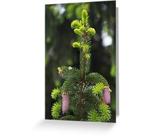 pine in the spring Greeting Card