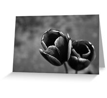 Tulip Up Close and Stark Greeting Card
