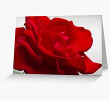 roses in the garden Greeting Card