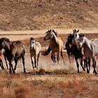 Thundering Hooves by Kent Keller
