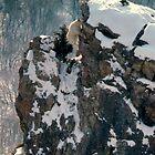 Cliffside Acrobat by Kent Keller