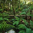 Rainforest at the National Botanic Garden in Canberra/ACT/Australia by Wolf Sverak