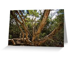 Interesting tree branches in the National Botanic Garden in Canberra/ACT/Australia Greeting Card