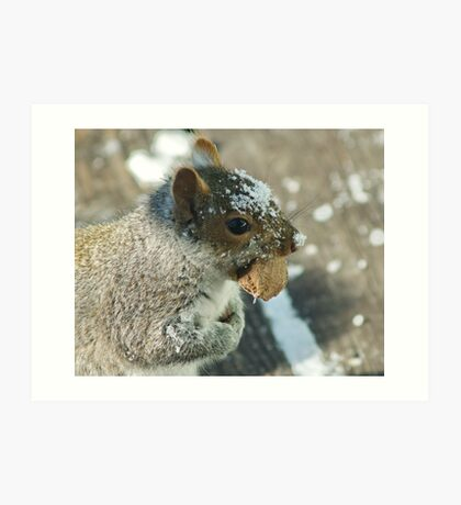 Squirrel with Brazil Nut Art Print