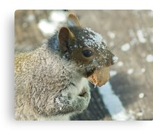Squirrel with Brazil Nut Metal Print