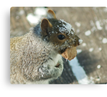 Squirrel with Brazil Nut Canvas Print
