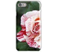 Peppermint Rose ~ Sweet and Spicy  iPhone Case/Skin
