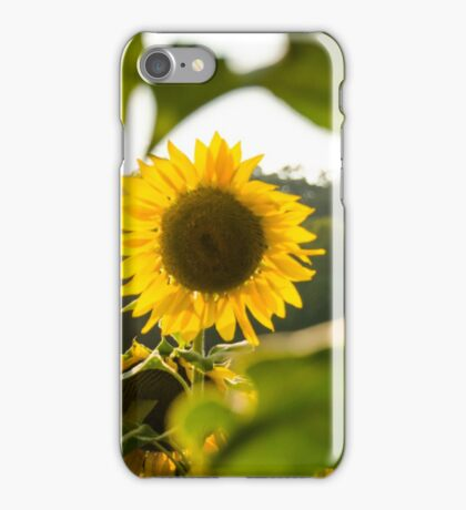Sunflowers 2 iPhone Case/Skin