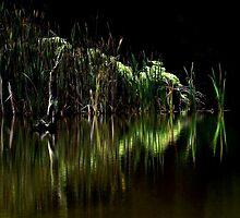Rainforest Tarkine by Angelika  Vogel