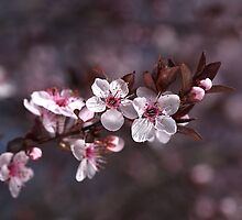 Spring Is Blossom by Joy Watson