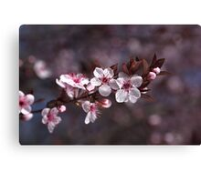 Spring Is Blossom Canvas Print