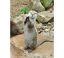 Otter applause Photographic Print