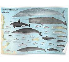 Marine Mammals of India Poster