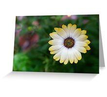 A lonely Daisy Greeting Card